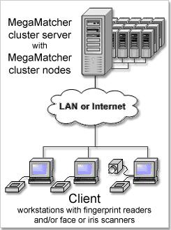 MegaMatcher Cluster Chart